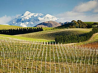 Yealands Estate in Marlborough, NZ.  Judged makers of the world's best Sauvigon Blanc.  And definitely one of the world's most beautiful vistas.  See it on our 2014 NZ tour.